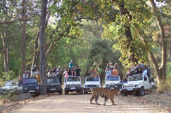 Bandhavgarh-National-Park-925011562-7865869-2-600x397